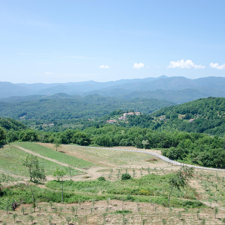 Grecciola landscape